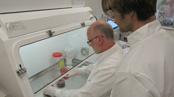 Recent meningitis research projects completed