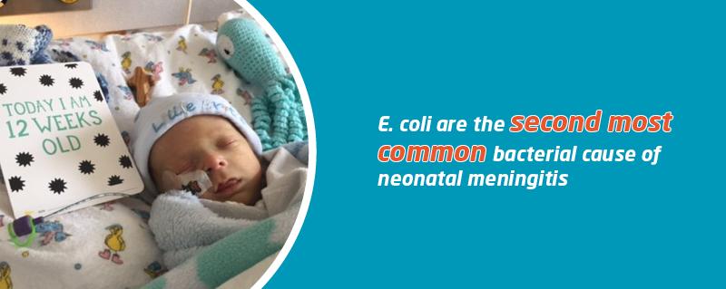 E. coli meningitis | Meningitis Now