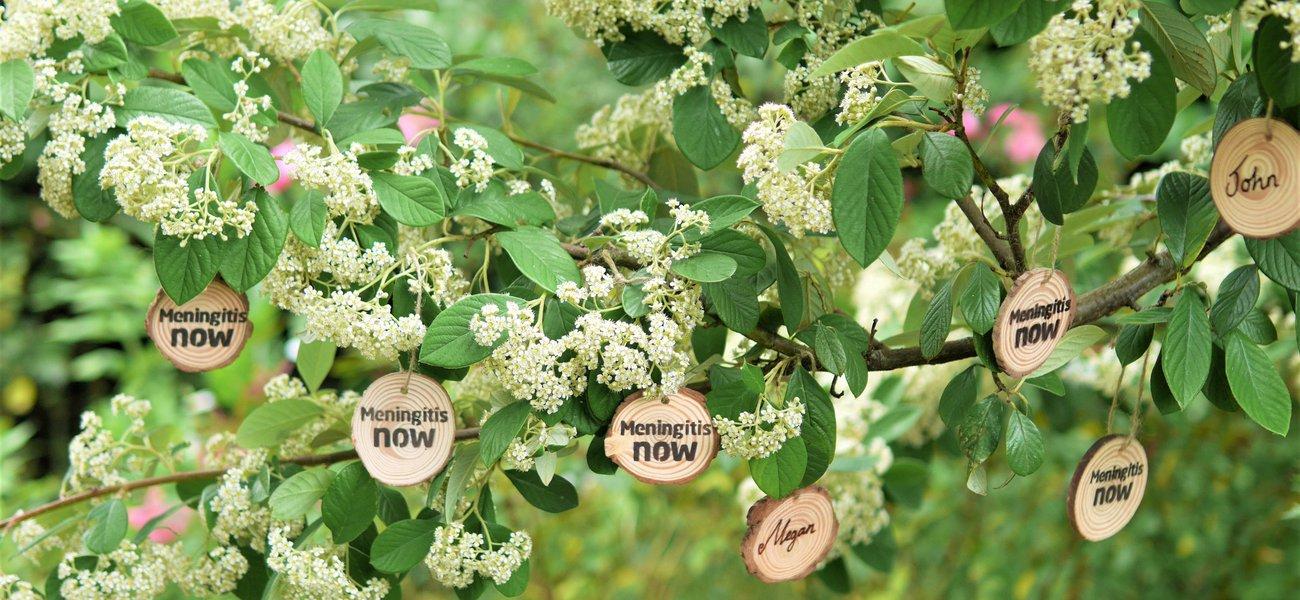 Meningitis Now virtual remembrance garden